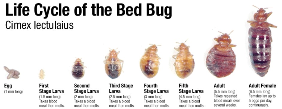 Double Sided Carpet Tape Bed Bugs - Carpet Vidalondon